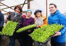 INICIÓ LA NUEVA TEMPORADA DE HUERTAS URBANAS CON ENTREGA DE PLANTINES DE LECHUGA A MÁS DE 75 PRODUCTORES LOCALES
