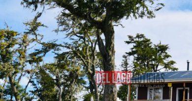 TOLHUIN: Robaron herramientasde una cabaña en construcción